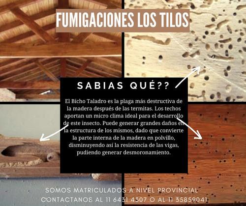 bicho taladro-control de plagas/fumigacion-zona norte/caba