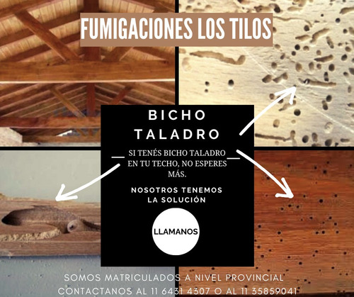 bicho taladro - fumigación plagas - zona norte - caba
