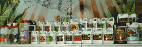 big bud advanced nutrients booster flora 500ml - olivos grow