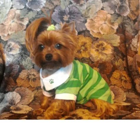 blusa para cão roupas listradas lapela algodão de estimação