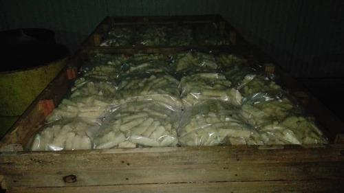 bocaditos de yuca congelados (for export).