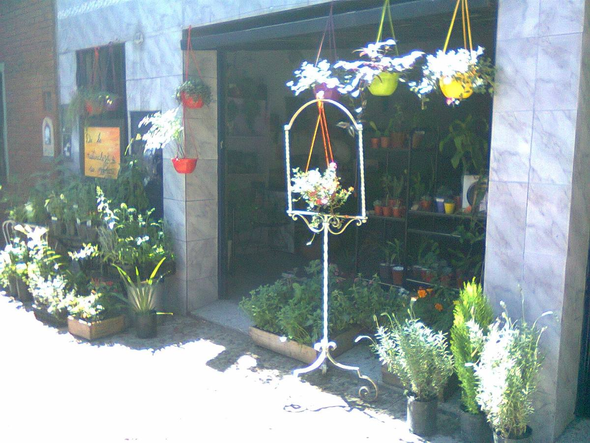bols planta colgante colores exterior flores maceta balcn cargando zoom - Plantas Colgantes Exterior