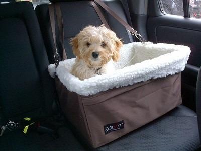 bolso canasto de mascotas para vehiculo auto perro gato