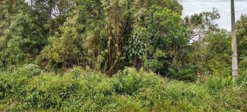 bom e barato terreno no jardim marambá - ref 4196