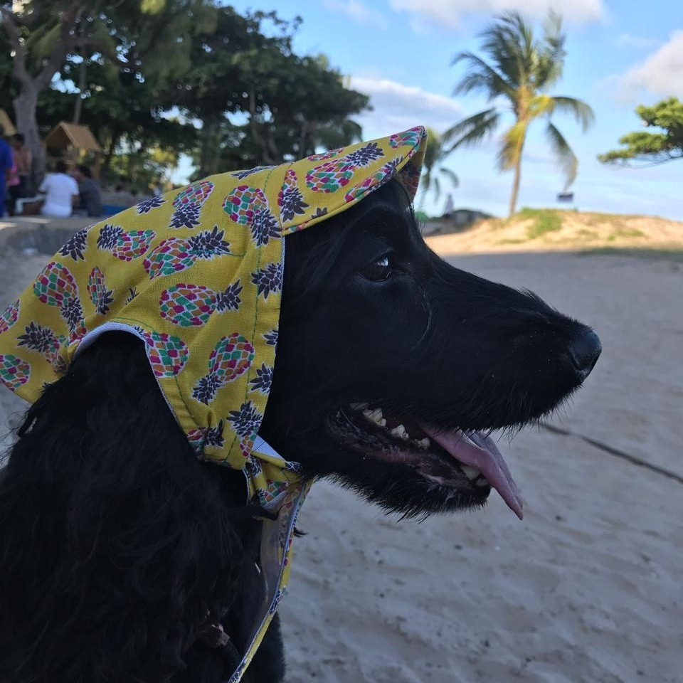 Boné Pet Estampa Abacaxis Peludos Moda Pet - R  22 0253469eda0