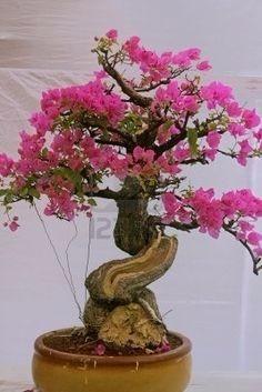 bonsai 60 semillas de mini manzana roja (envio gratis)