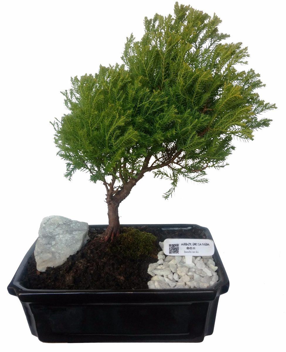Bonsai árbol De La Vida 30 Cm De Alto 99900 En Mercado Libre