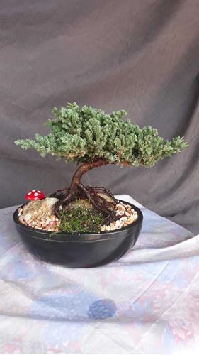 bonsai con decoraciones esclusivas