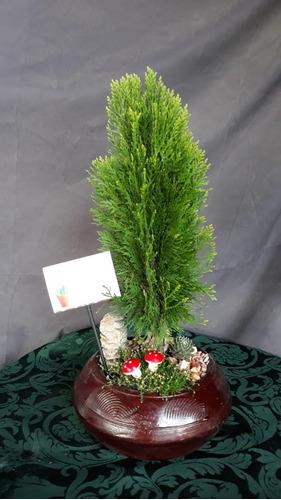 bonsai ,suculentas,mini jardines desde $15.00