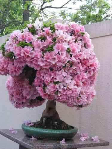 bonsáis flor y arbol 60 semillas, instructivo y envío gratis