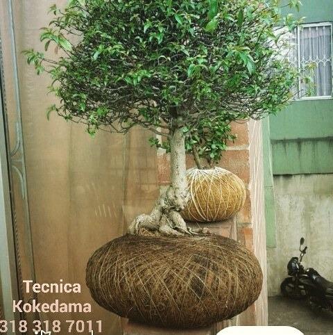 bonsais¿poda-alambrado,nevaris, jardines-verticales ventas.