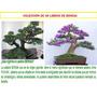 Pack De 48 Manuales De Arboles Bonsai Pdf