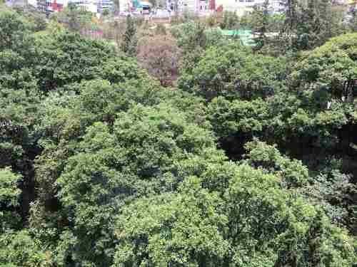 bosque de las lomas, excelente departamento con vista espectacular al bosque
