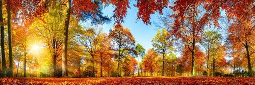 bosque en otoño canvas cuadro decorativo