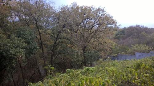bosque residencial