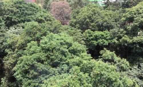 bosques de las lomas, excelente departamento con vista espec