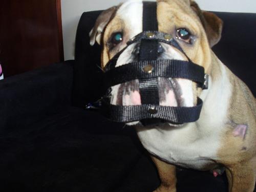 bozal para perros buldog