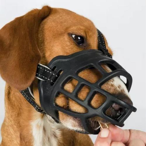 bozal perro mascota