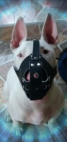 bozales en cuero para perros moedelo 2