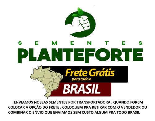 brachiaria brizantha 100 kg - marandu - frete gratis !!!
