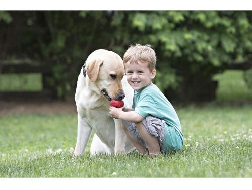 brinquedo cães kong classic grande- made in usa frete gratis