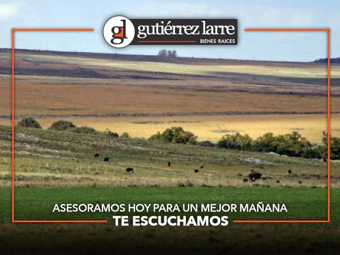 buen campo agrícola, ganadero, forestal. lindo casco y costa
