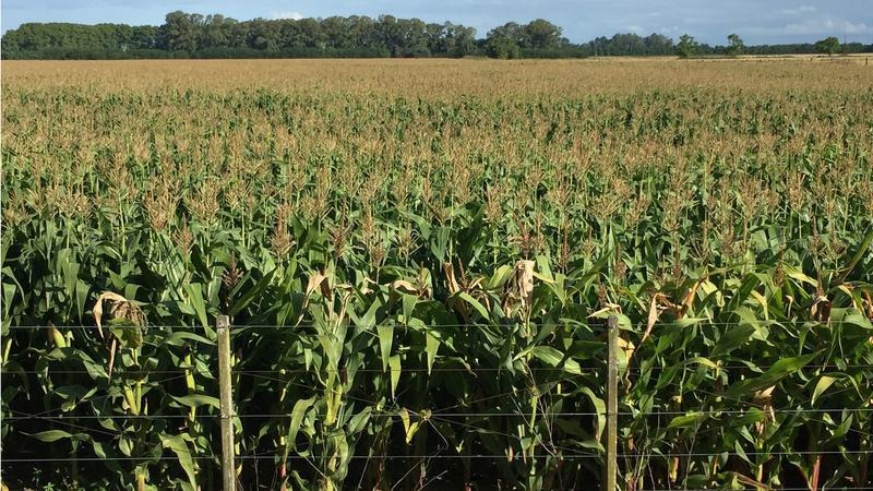 buen campo mixto, excelente unidad productiva agrícola-ganadera