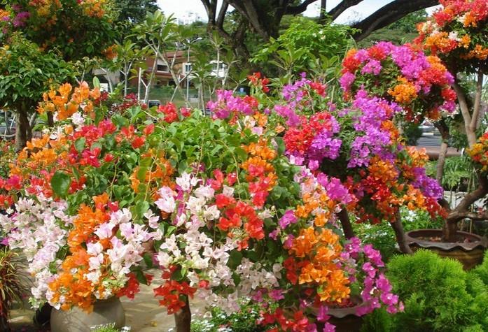 Compra de muebles usados en flores