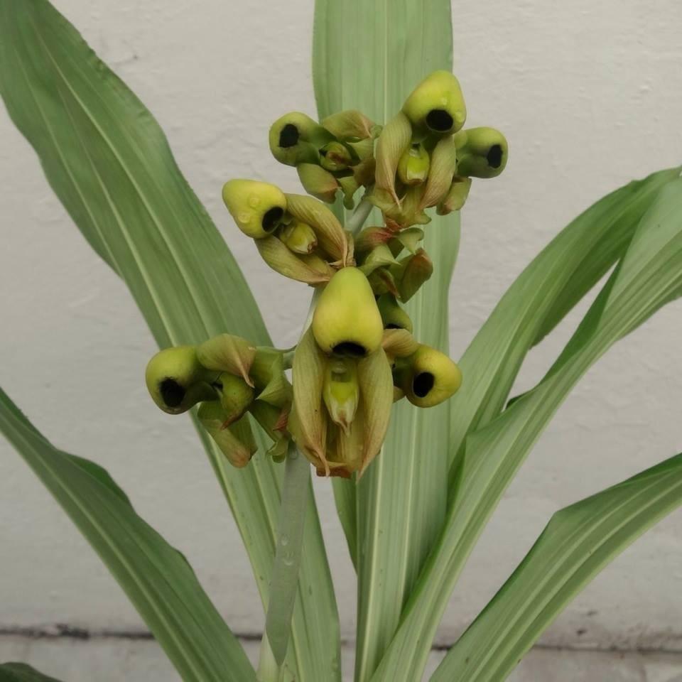 10 tipos de flores yahoo dating 3