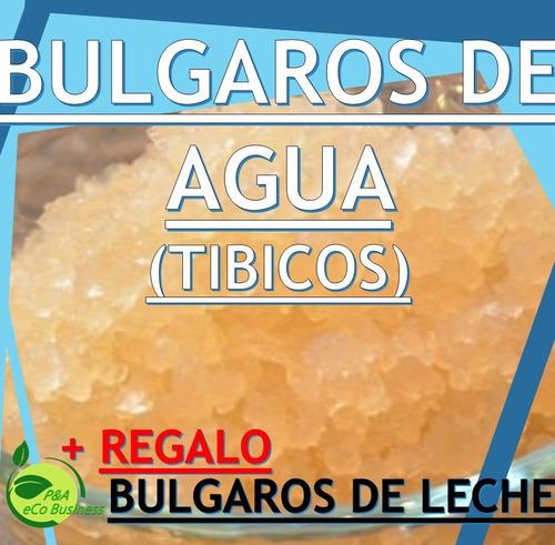 Bulgaros De Agua Tibicos+ Kefir (leche) Regalo+guia De Uso