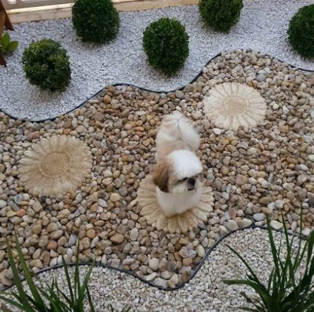 Bulto 10 kg piedra boleada m rmol amarilla decoraci n for Bolsa de piedra para jardin