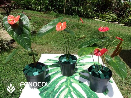 bulto de sustrato para plantas tropicales hydrobed