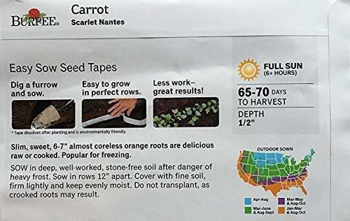 Cinta de semillas de 6 metros Early Nantes 2-600 Seeds Zanahoria Vegetal