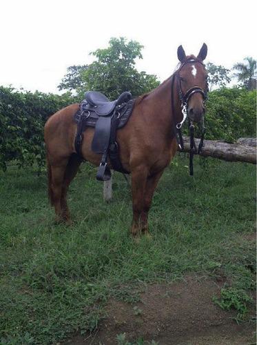 caballo alazano romanero