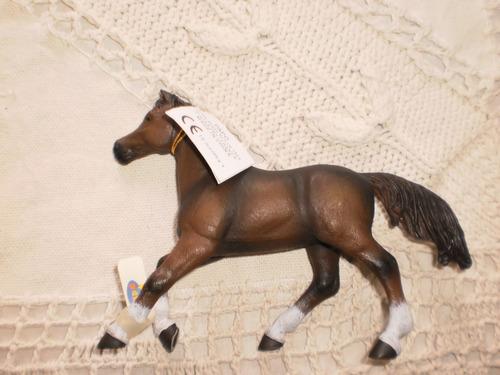 caballo anglo arabe papo importado