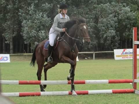 caballo de salto
