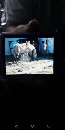 caballo de sincha soguero