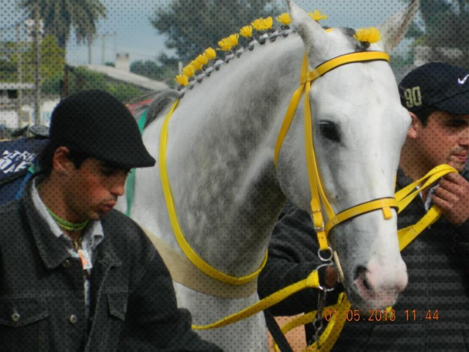 Caballos juego de riendas y cabezada variedad de for Cabezadas para caballos