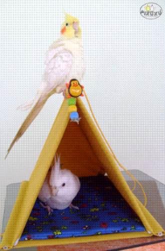 cabana casa toca para calopsita tamanho g