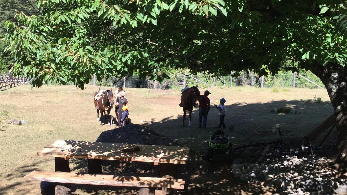 cabaña lodge res. nac malleco- rio renaico-termas pemehue