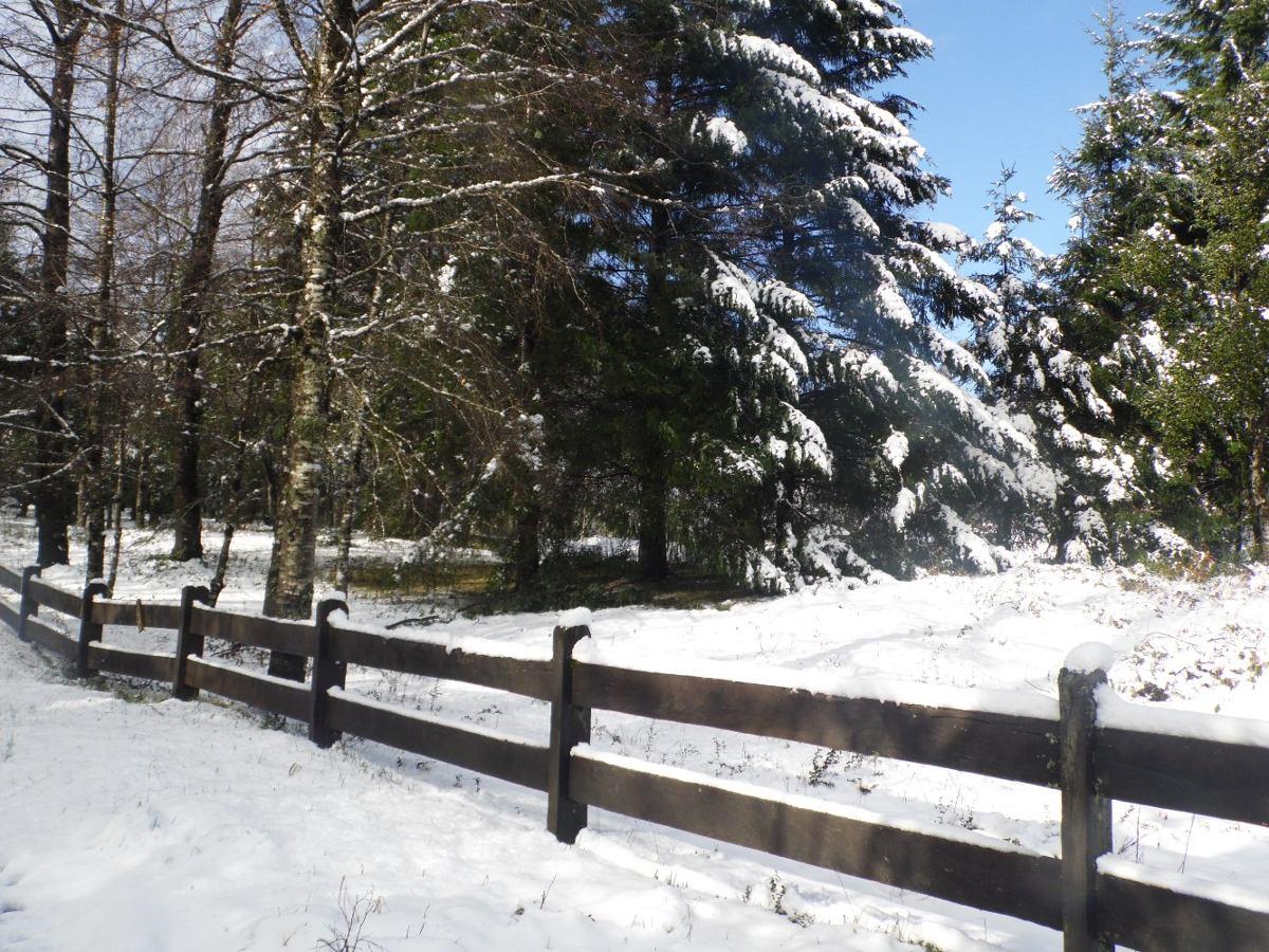 cabaña pucon oferta 5 km lago arriendo