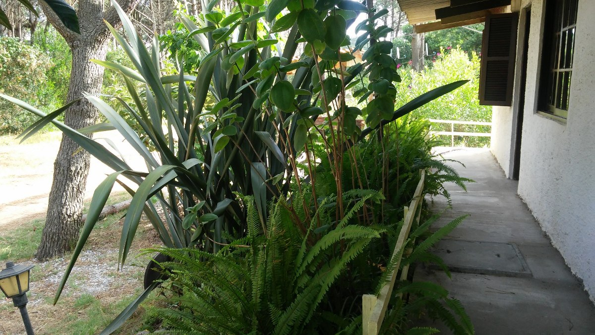 cabañas  - alquiler -  anaconda - la paloma acropolis
