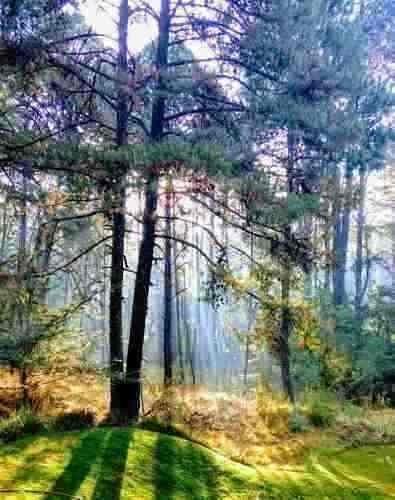 cabañas en bosque tapalpa con club hipico