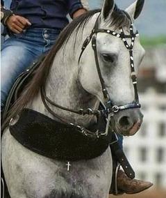 5fd70fafe Equipamento Para Cavalos De Vaquejada - Acessórios para Cavalos no ...