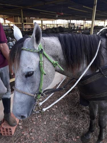 cabezada para freno de caballo