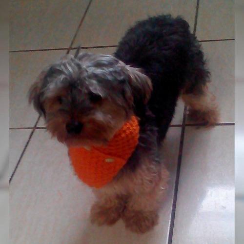 cachecol de tricô pet laranja t1/t2