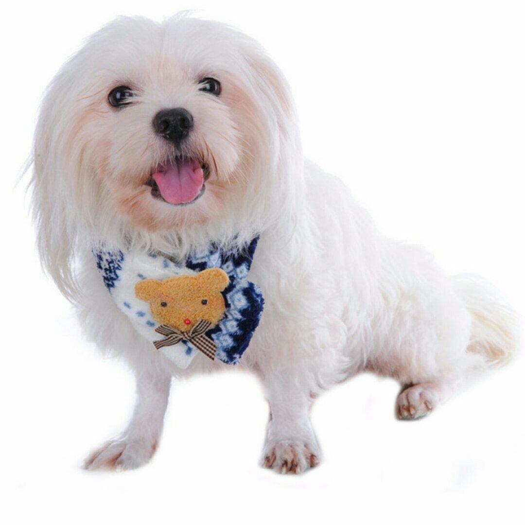 5a0dcec7b Cachecol Pet Azul P  Cão   Cachorro - Tam M Nº3 - R  38