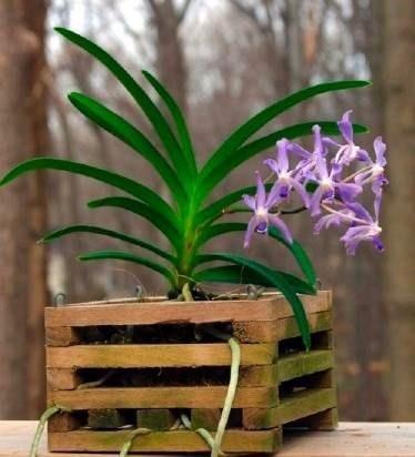 cachepot nr 01 para orquídeas 15x15
