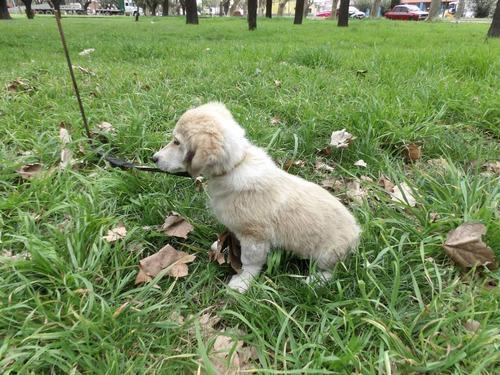 cachorra en adopcion