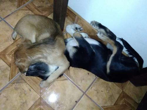 cachorritos en adopción responsable